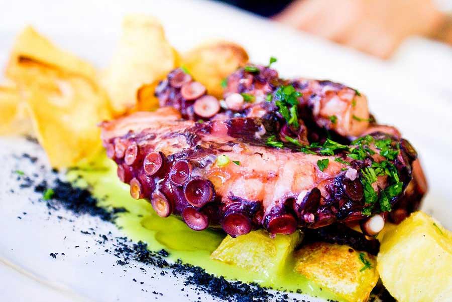 Vitamin B12 - Octopus