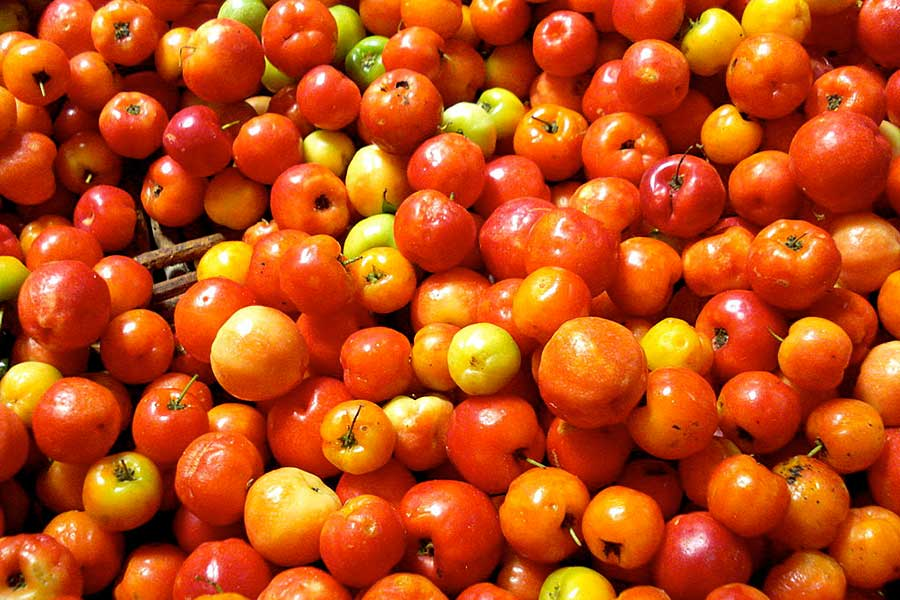 Vitamin C - Acerola Cherries